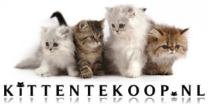 BannerKittenTeKoopNL